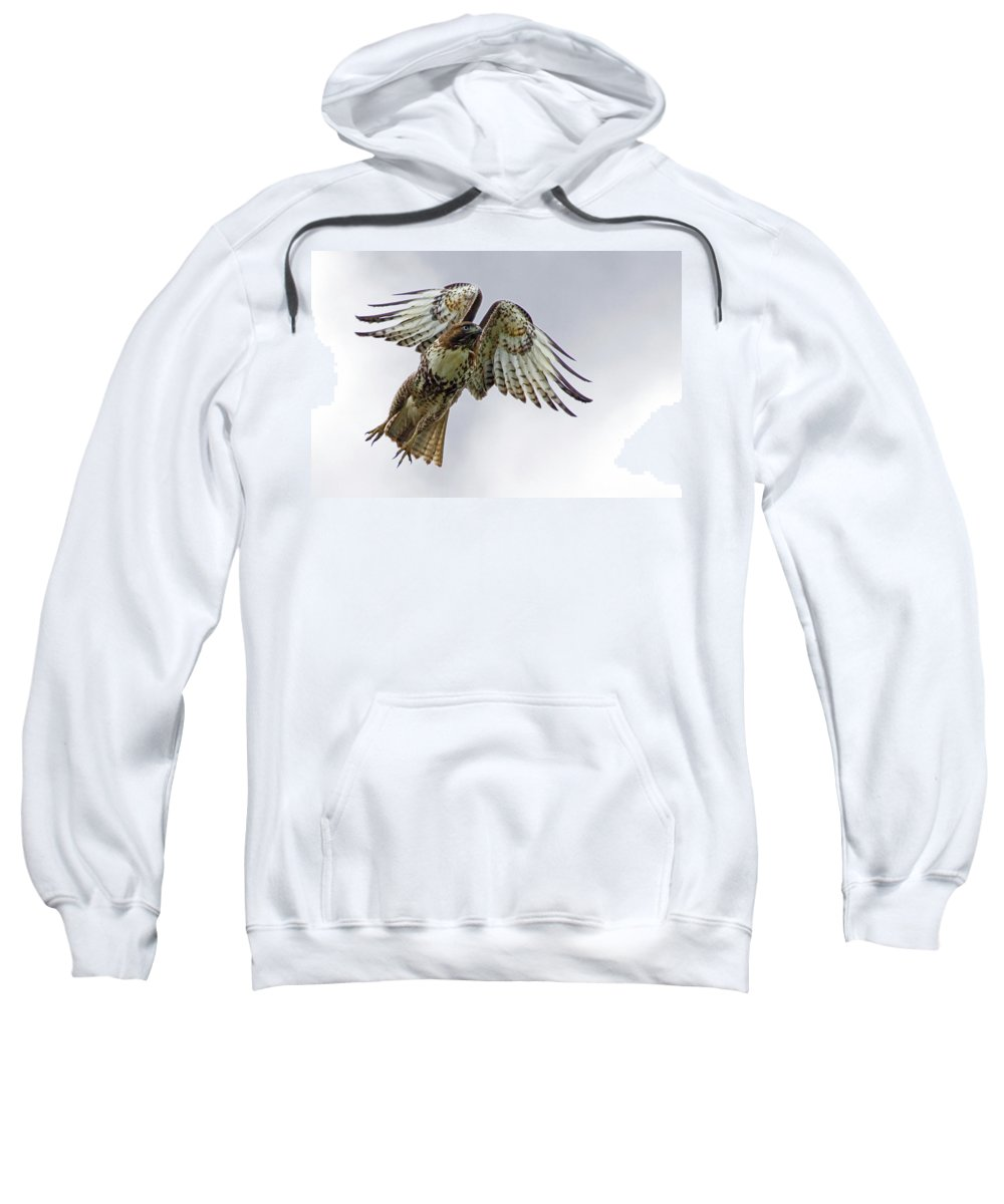 Hawk Sweatshirt featuring the photograph Red Tail Takeoff by Randall Ingalls