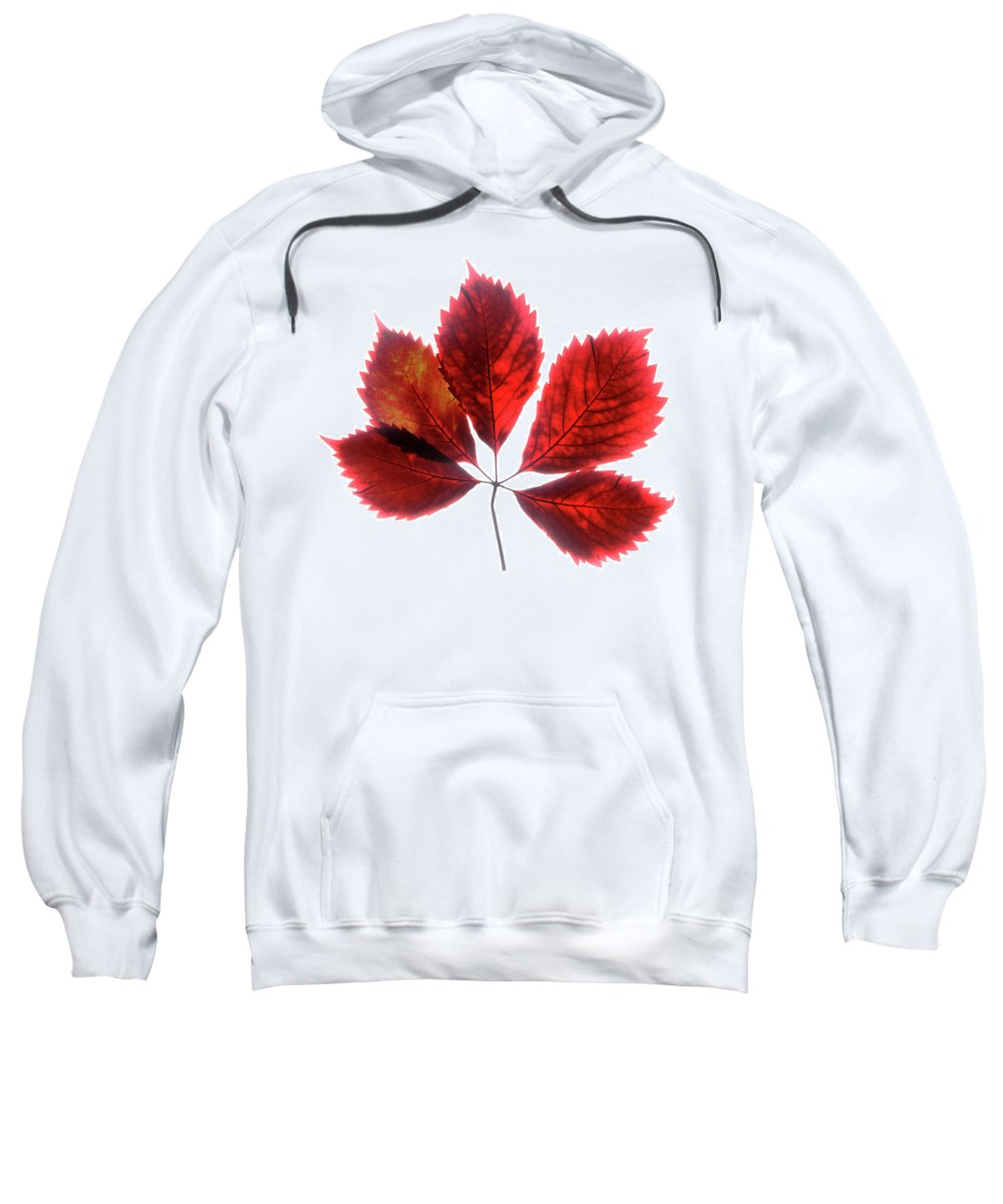 Leaf Sweatshirt featuring the photograph Red Vine Leaf by Stefania Levi