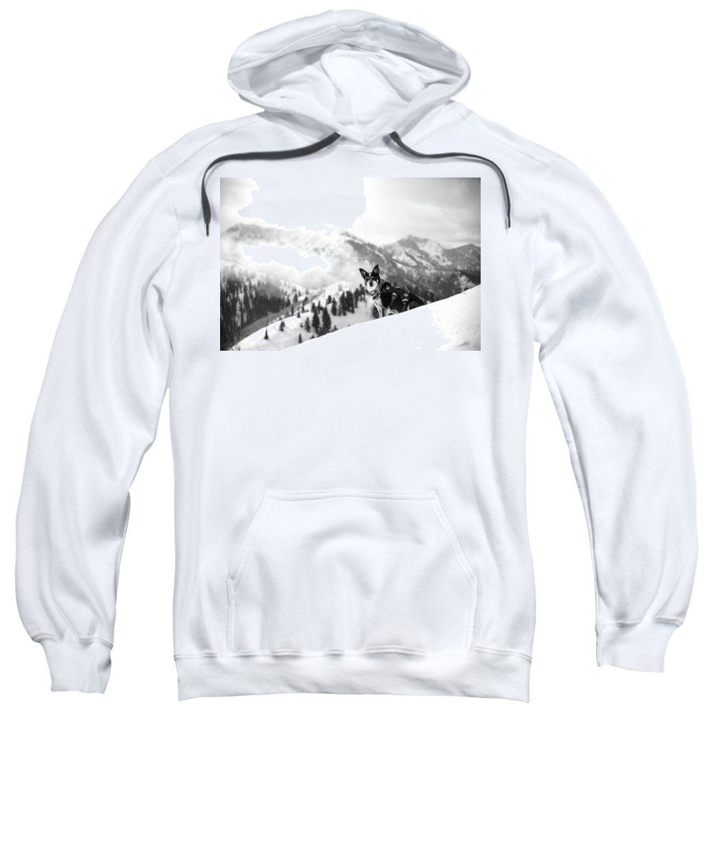 Black And White Sweatshirt featuring the photograph Rescue Dog by Billy Soden