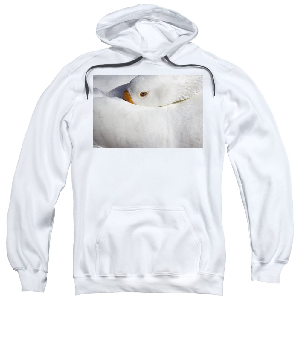 Goose Sweatshirt featuring the photograph Resting White Goose by Phyllis Denton