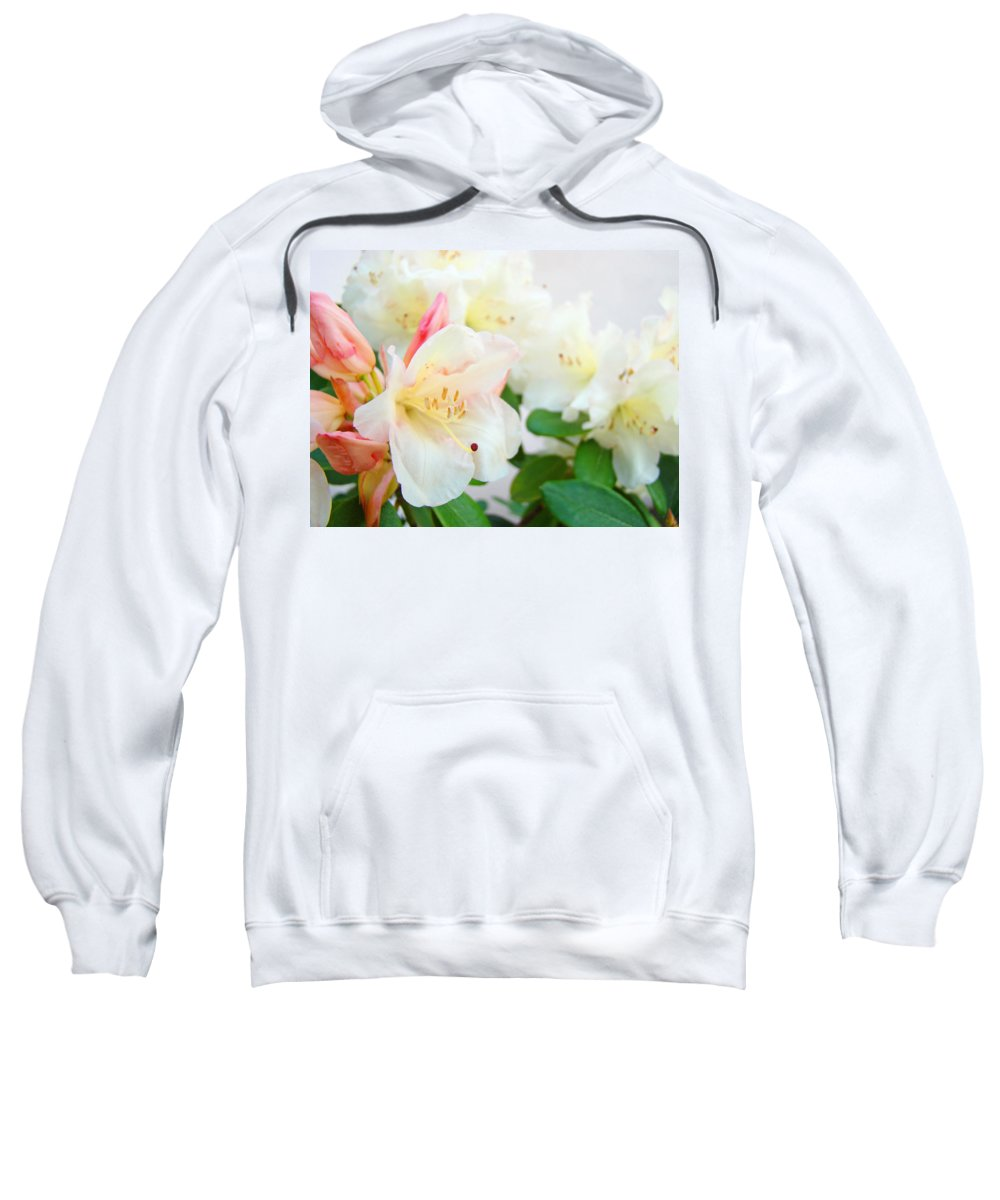 Rhodies Sweatshirt featuring the photograph Rhodies Art Prints White Pink Rhododendrons Baslee Troutman by Baslee Troutman