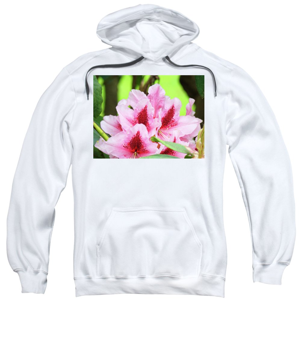 Rhodie Sweatshirt featuring the photograph Rhododendron Floral Art Prints Rhodies Flowers Canvas Baslee Troutman by Baslee Troutman