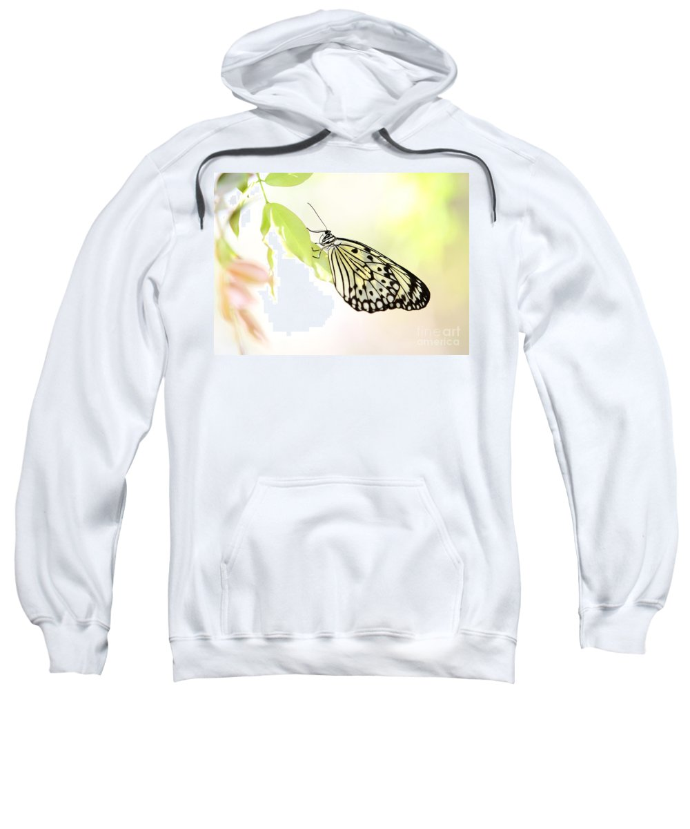 Butterfly Sweatshirt featuring the photograph Rice Paper In The Garden by Sabrina L Ryan