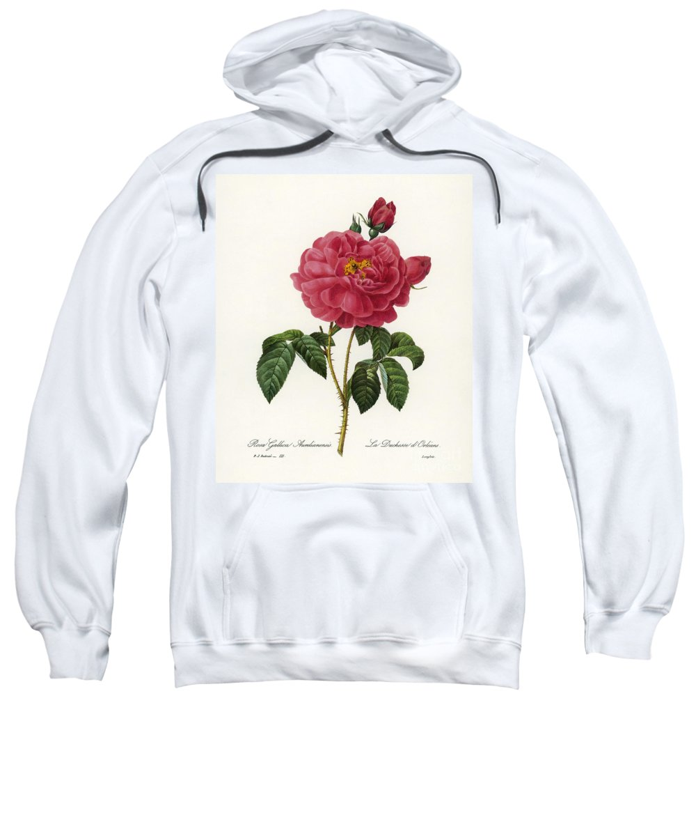 1833 Sweatshirt featuring the photograph Rosa Gallica by Granger