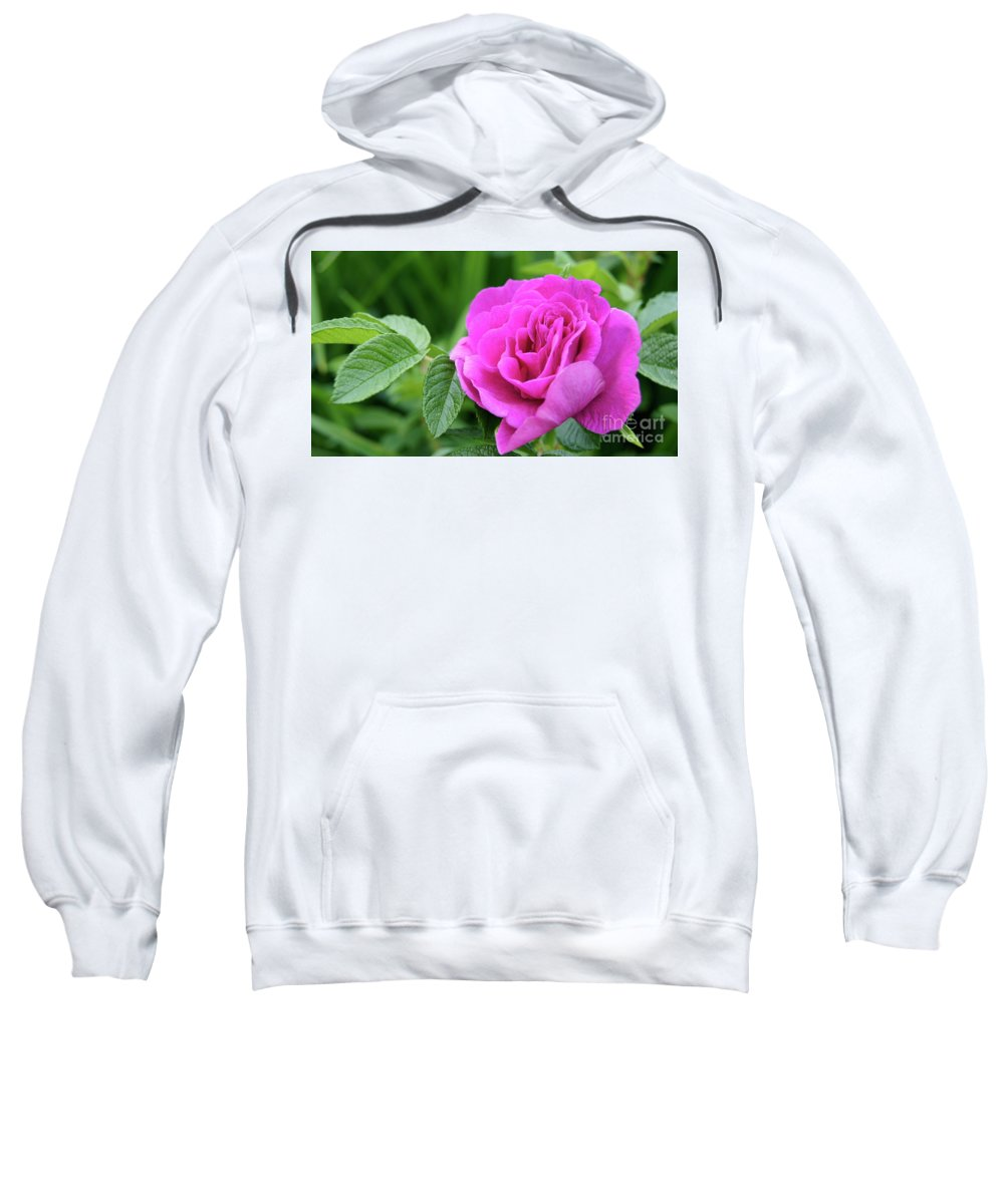 Sweatshirt featuring the photograph Rose In The Afternoon by Line Gagne