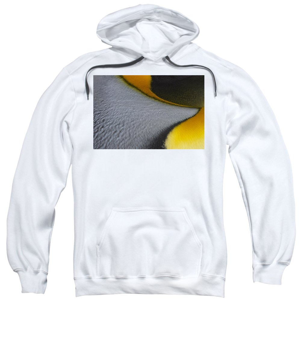 King Penguin Sweatshirt featuring the photograph Royal Detail by Tony Beck