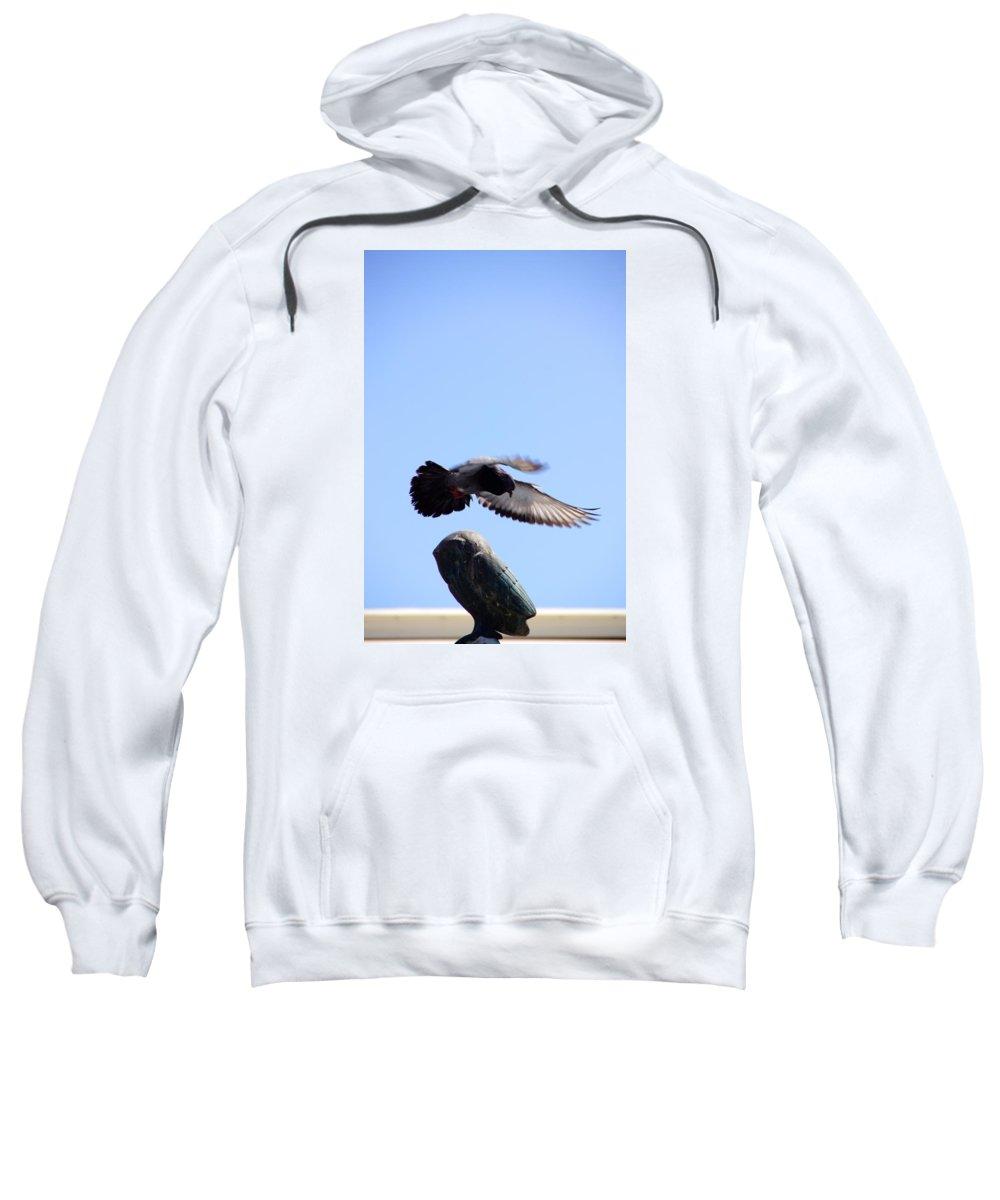 Seagull Sweatshirt featuring the photograph Safe Landing by Ron Koivisto