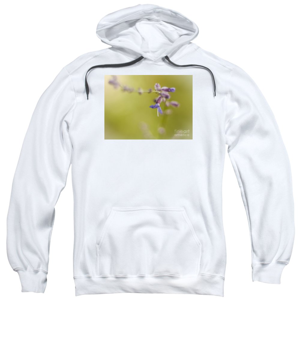 Russian Sage Sweatshirt featuring the photograph Sage Abstract by Lisa Phillips