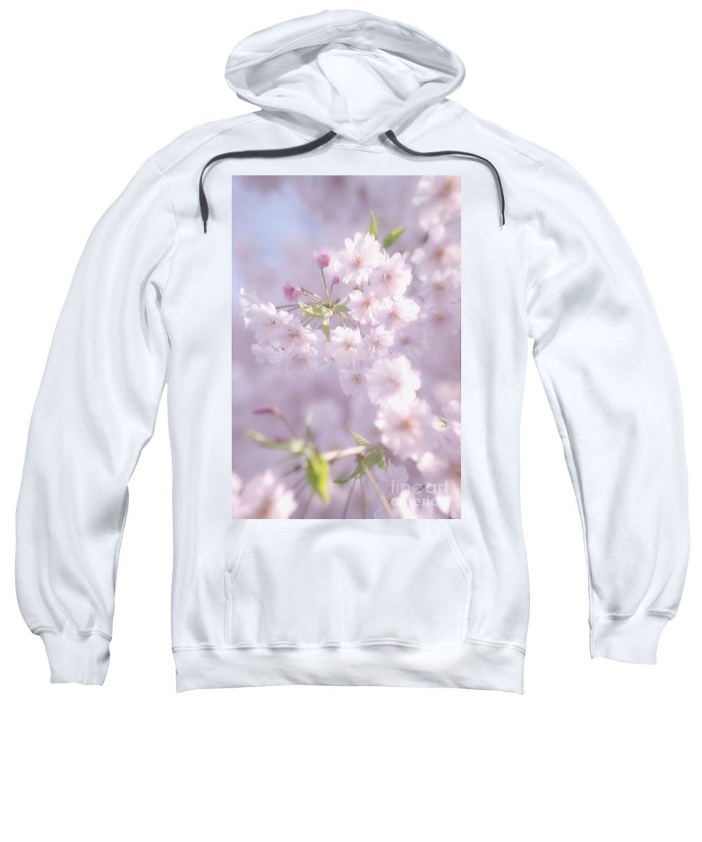 Cherry Blossoms Sweatshirt featuring the photograph Sakura Trees by Luv Photography