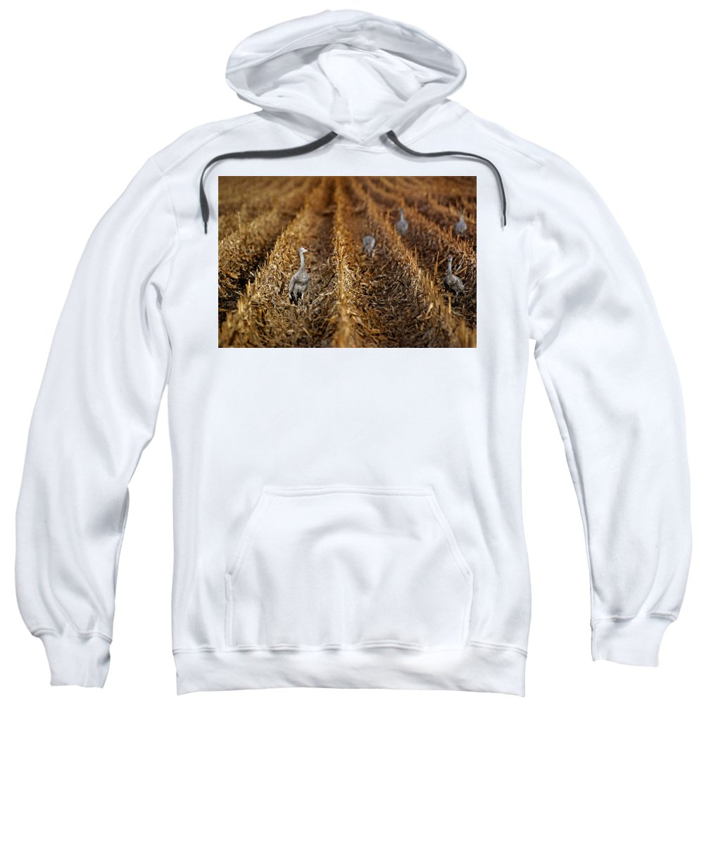 Sandhill Cranes Sweatshirt featuring the photograph Sandhill Cranes - Cornfield by Nikolyn McDonald