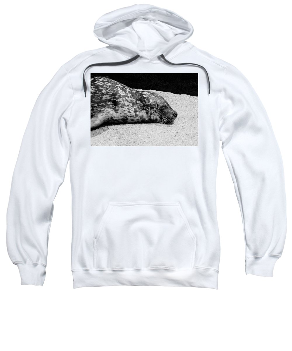 Seal Sweatshirt featuring the photograph Seal by Steven Natanson