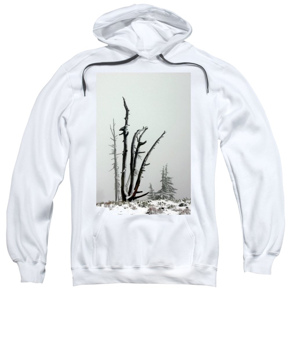 Snags Sweatshirt featuring the photograph September Snow by Albert Seger