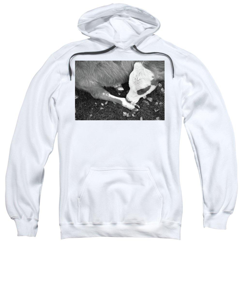 Inactive Photographs Hooded Sweatshirts T-Shirts