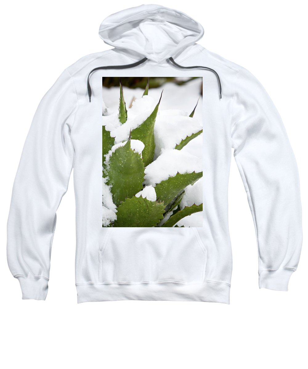 Agave Sweatshirt featuring the photograph Snow Covered Agave by Phyllis Denton