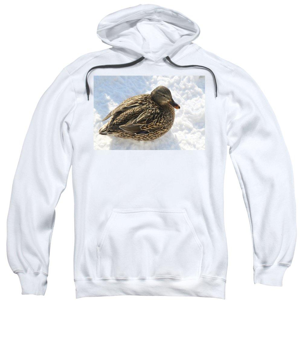 Mallard Sweatshirt featuring the photograph Snow Mallard by Lauri Novak