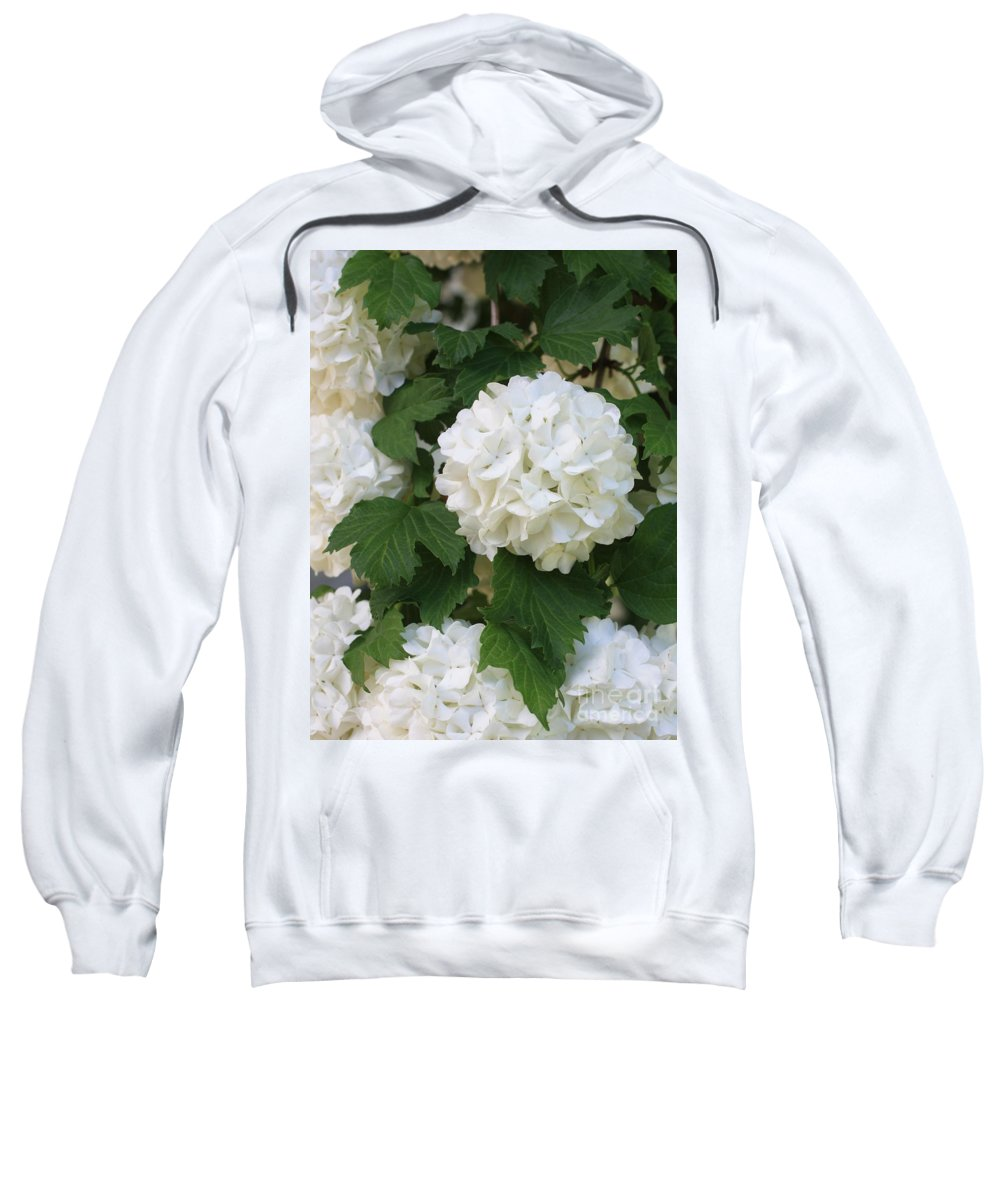 Snowball Tree Sweatshirt featuring the photograph Snowball Tree With Delicate Leaves by Carol Groenen