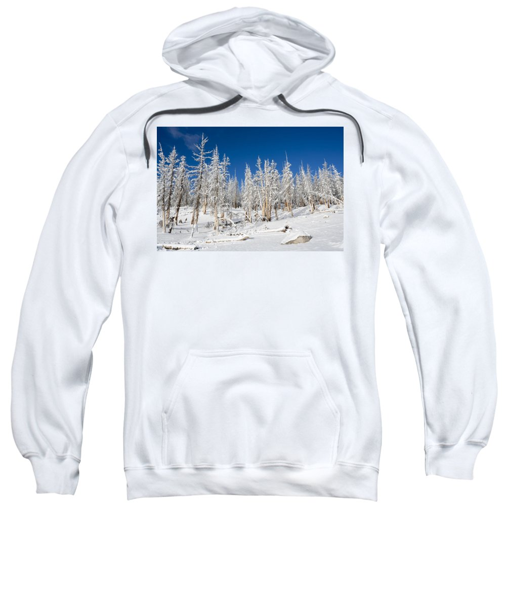 Winter Sweatshirt featuring the photograph Snowy Trees by Kelley King