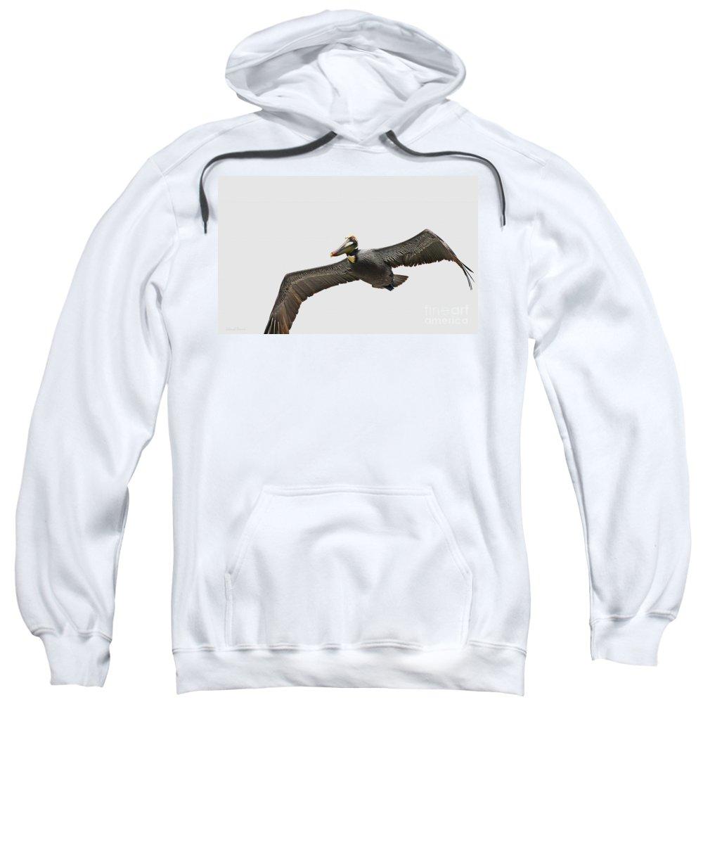 Bird Sweatshirt featuring the photograph Soaring Pelican Beauty by Deborah Benoit