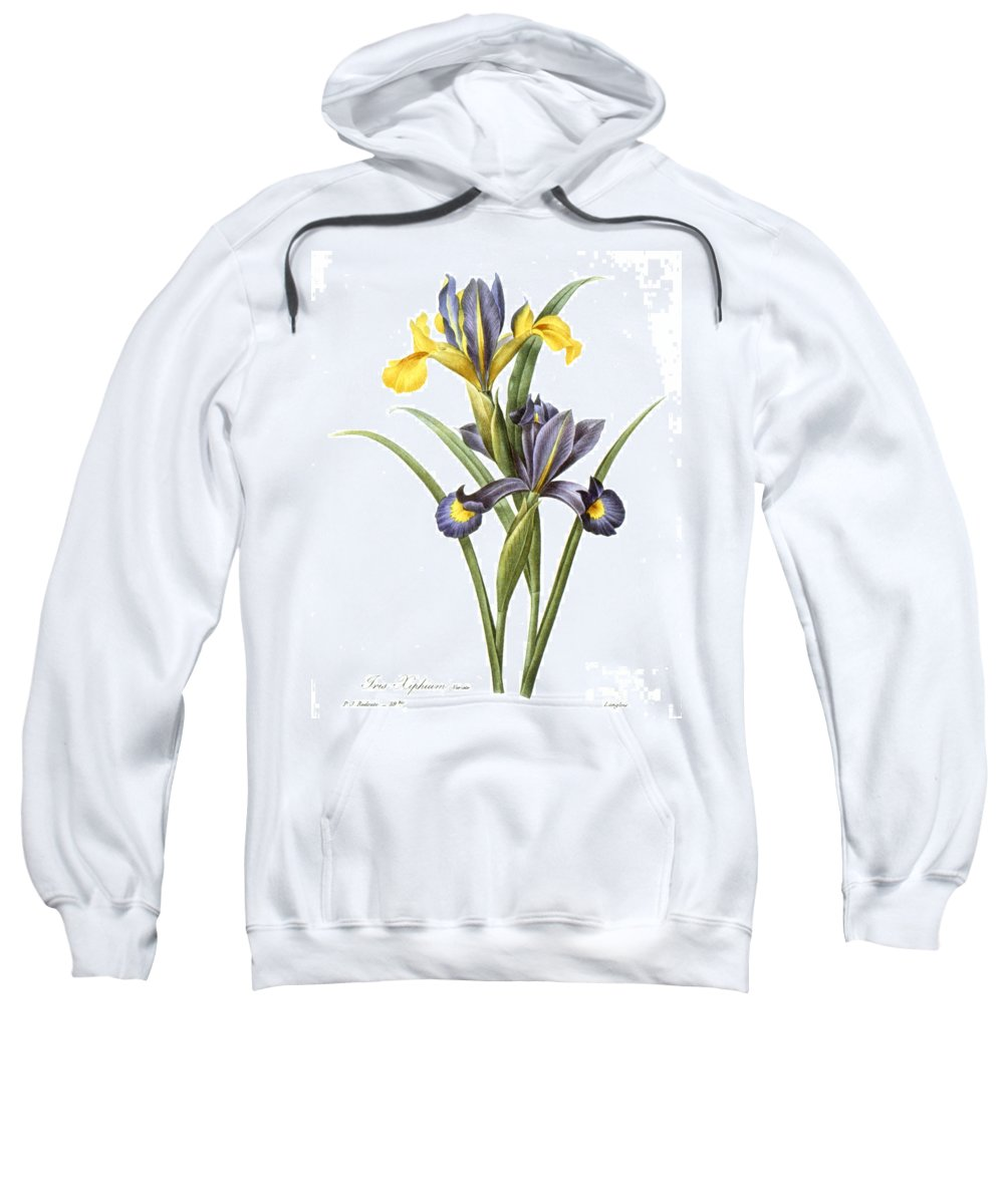 1833 Sweatshirt featuring the photograph Spanish Iris by Granger