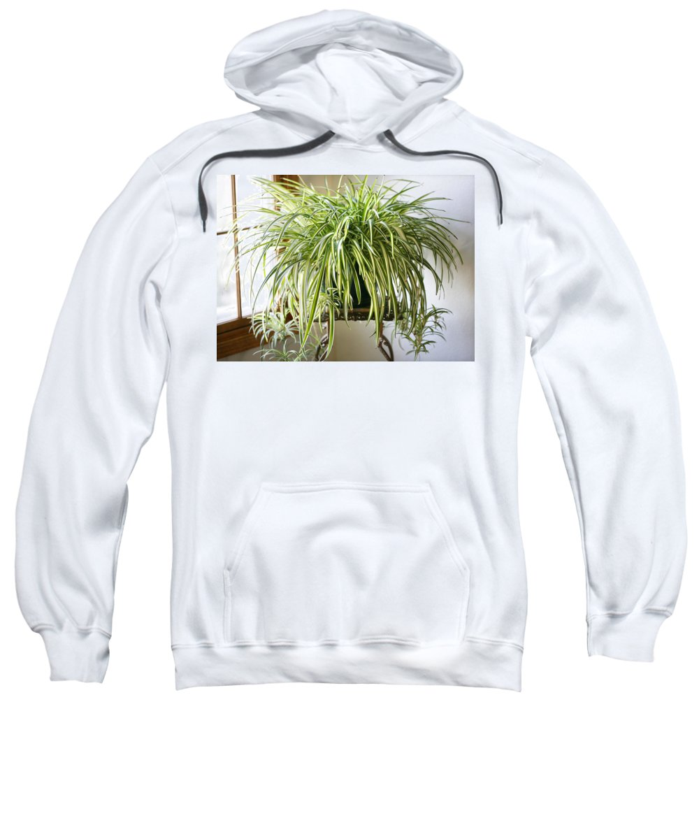 Spider Plant Sweatshirt featuring the photograph Spider Plant by Marilyn Hunt