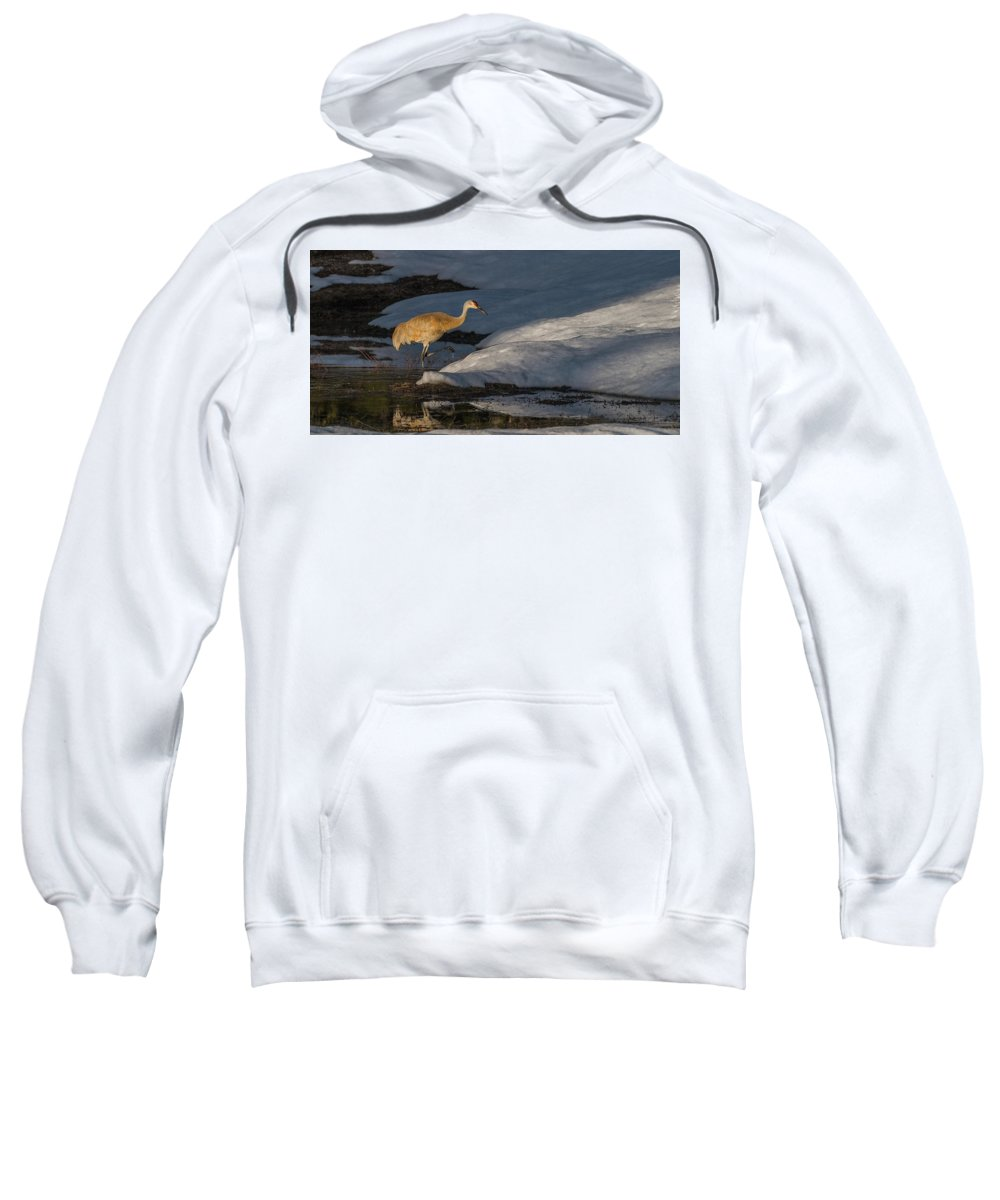 Sandhill Sweatshirt featuring the photograph Spring Sunset With Sandhill Crane by Yeates Photography