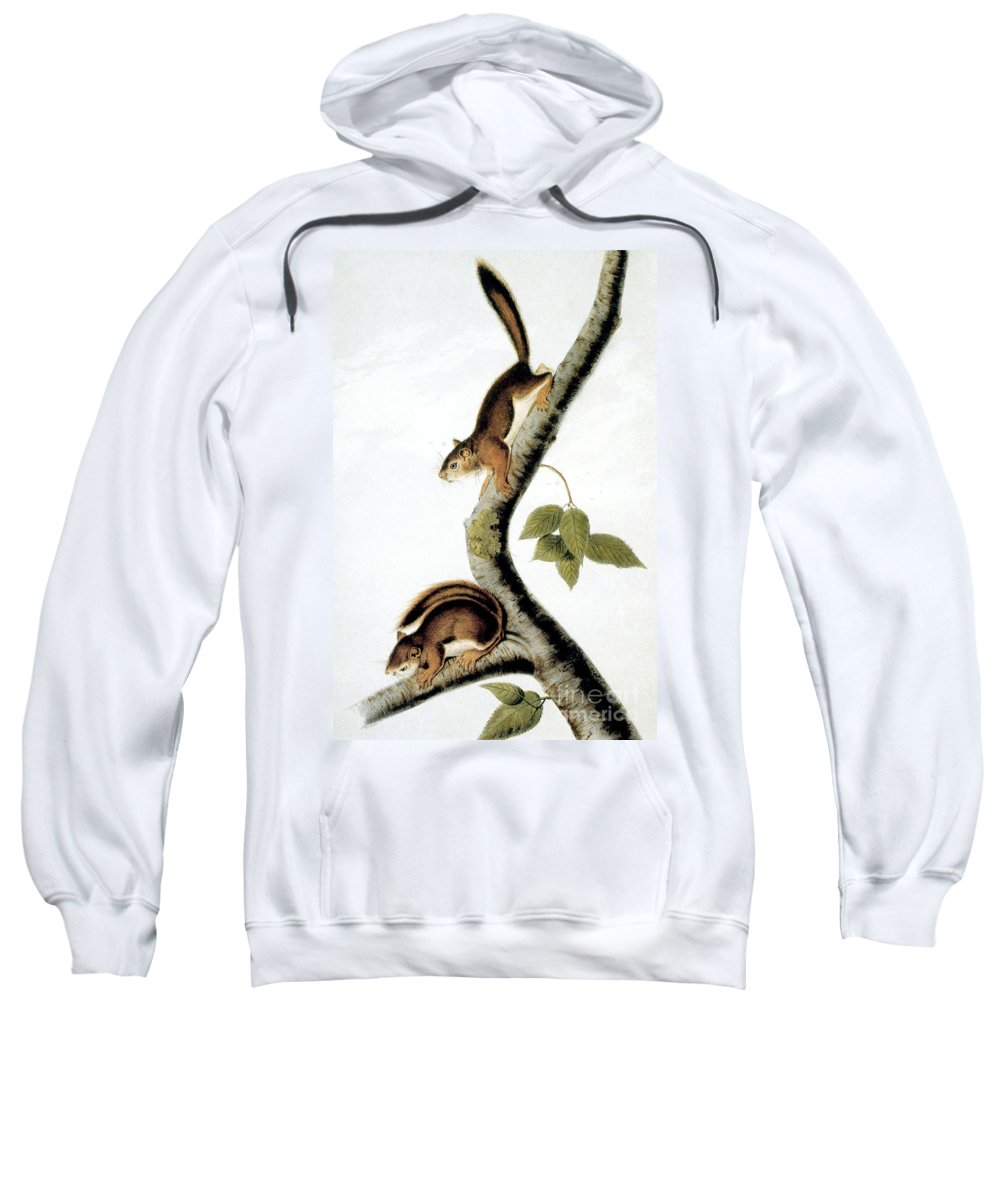1846 Sweatshirt featuring the photograph Squirrel by Granger