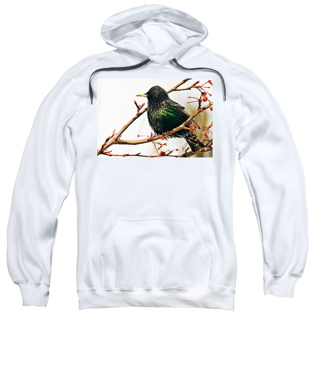 Animal Sweatshirt featuring the photograph Starling by Marcia Colelli
