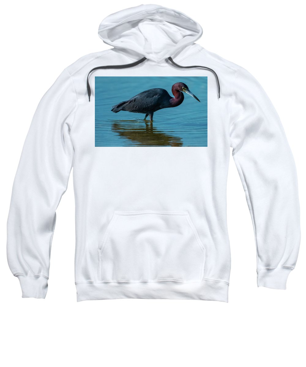 Birds Sweatshirt featuring the photograph Strolling On A Bright Morning by Donald Trimble