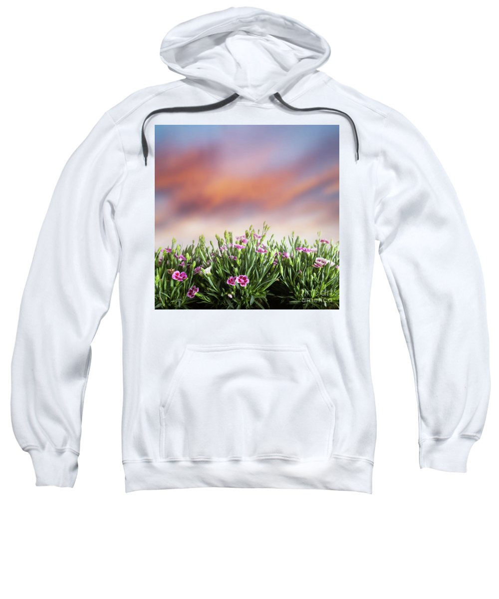 Grass Sweatshirt featuring the photograph Summer Meadow Flowers In Grass At Sunset. by Michal Bednarek