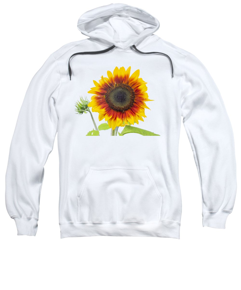 Sunflower Sweatshirt featuring the photograph Sunflower 2018-1 by Thomas Young