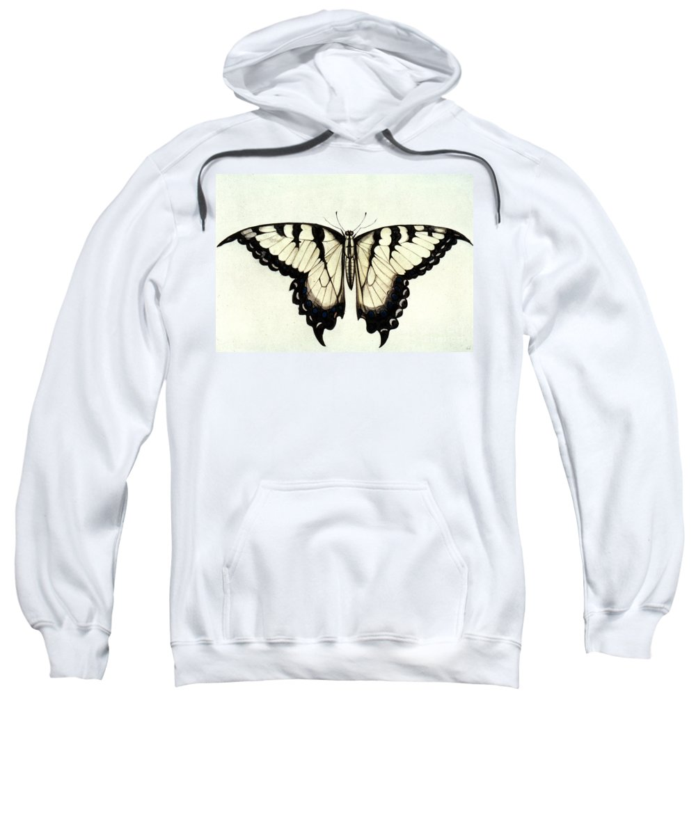 1585 Sweatshirt featuring the photograph Swallow-tail Butterfly by Granger
