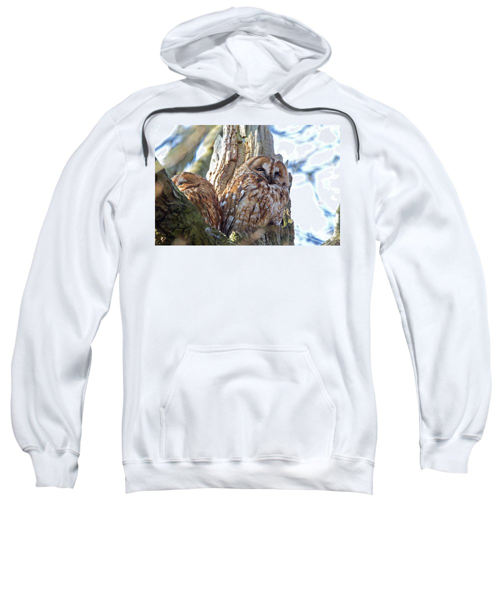 Tawny Owl Sweatshirt featuring the photograph Tawny Owls by Bob Kemp