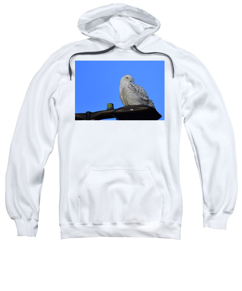 Snowy Owl Sweatshirt featuring the photograph That Look by Mark Madion