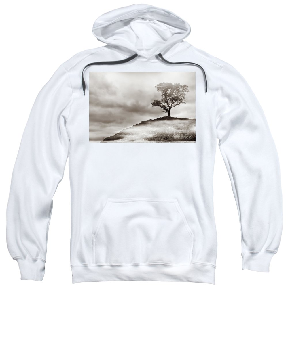 Tree Sweatshirt featuring the photograph The Edge of Never by Dana DiPasquale