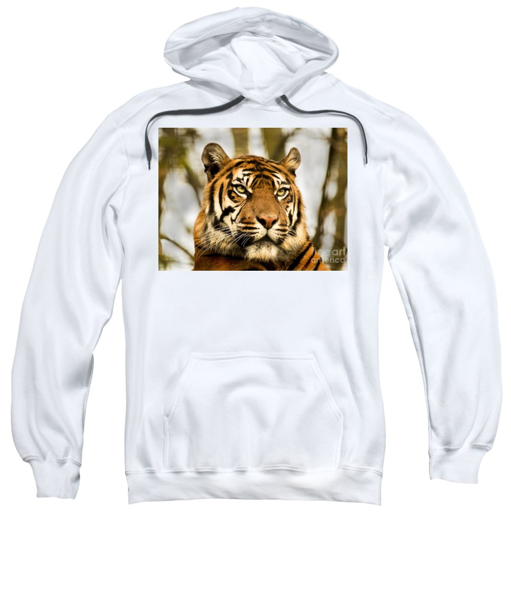 Tiger Orange Jungle Cats Feline Furry Zoo Sweatshirt featuring the photograph Tiger by Chris Wharmby