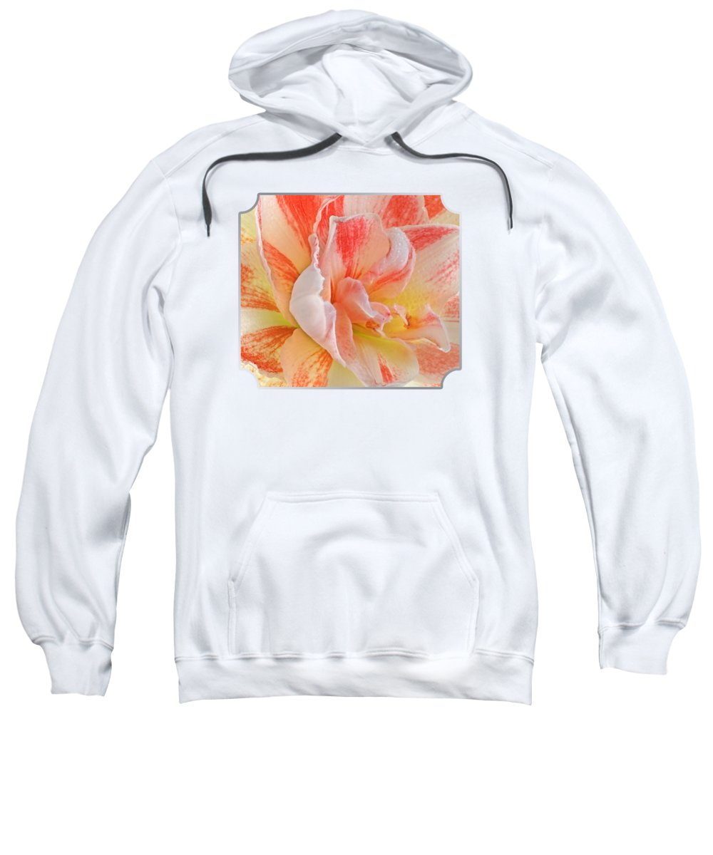 Amaryllis Photographs Hooded Sweatshirts T-Shirts