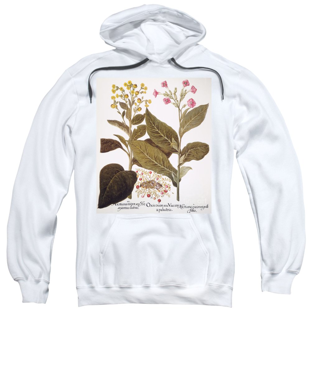 1613 Sweatshirt featuring the photograph Tobacco Rustica, 1613 by Granger