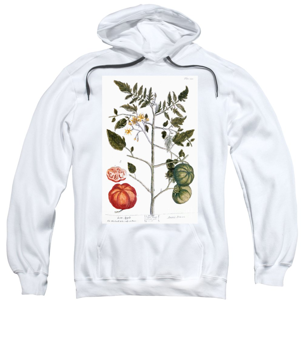 1730s Sweatshirt featuring the photograph Tomato Plant, 1735 by Granger