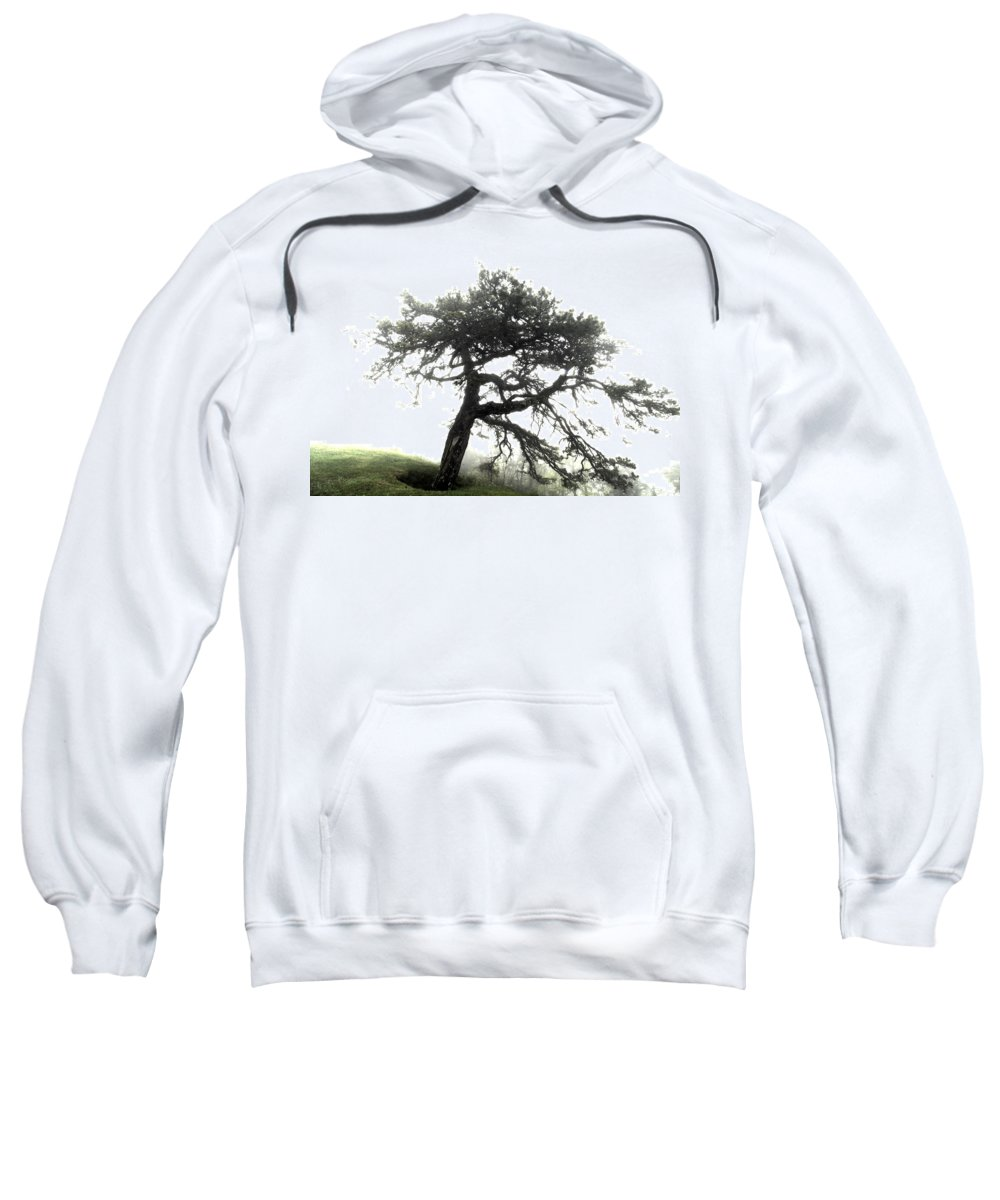Hdr Sweatshirt featuring the photograph Tree by Alex Grichenko