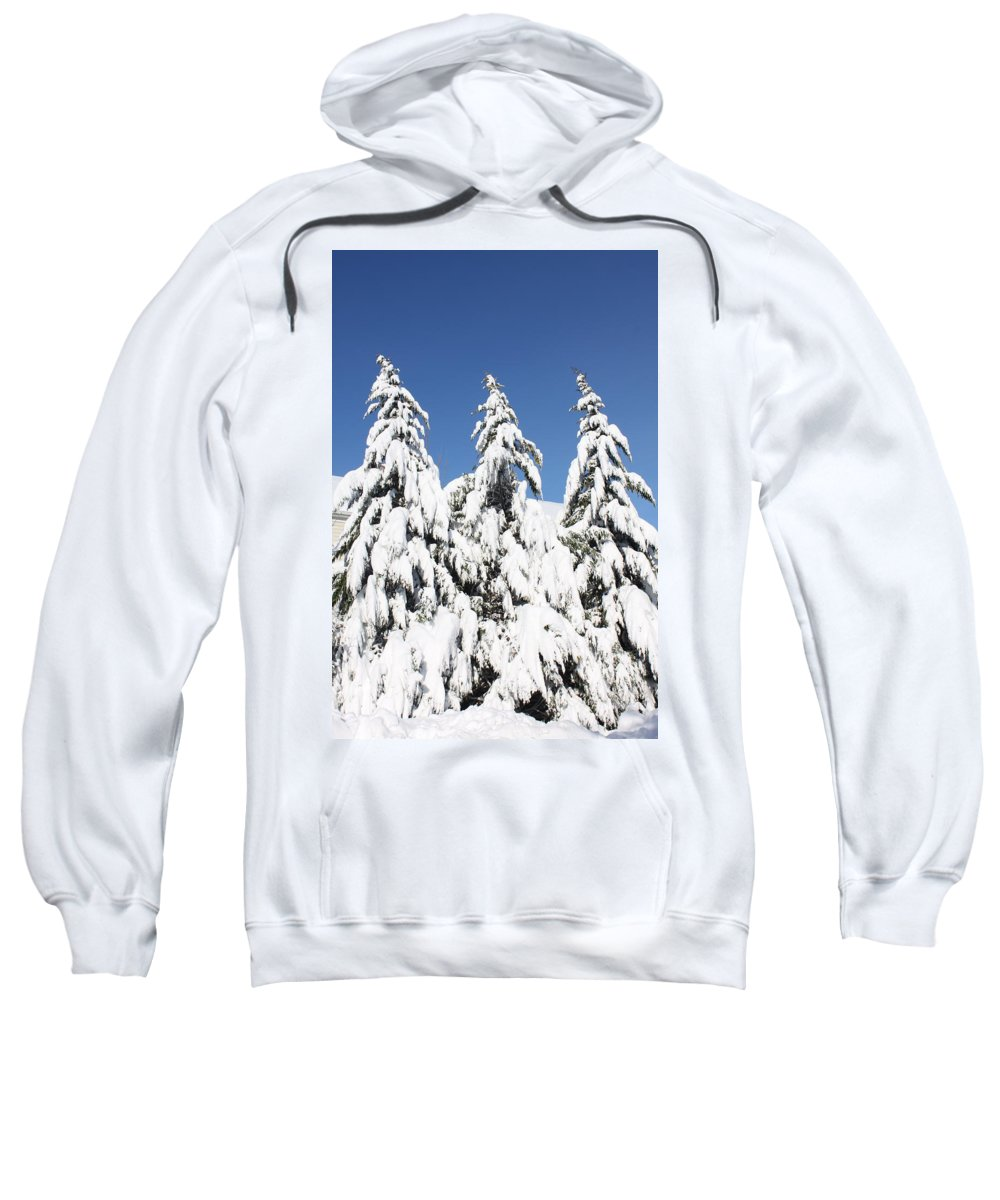 Snow Sweatshirt featuring the photograph Tree-o Of Evergreens by Lauri Novak