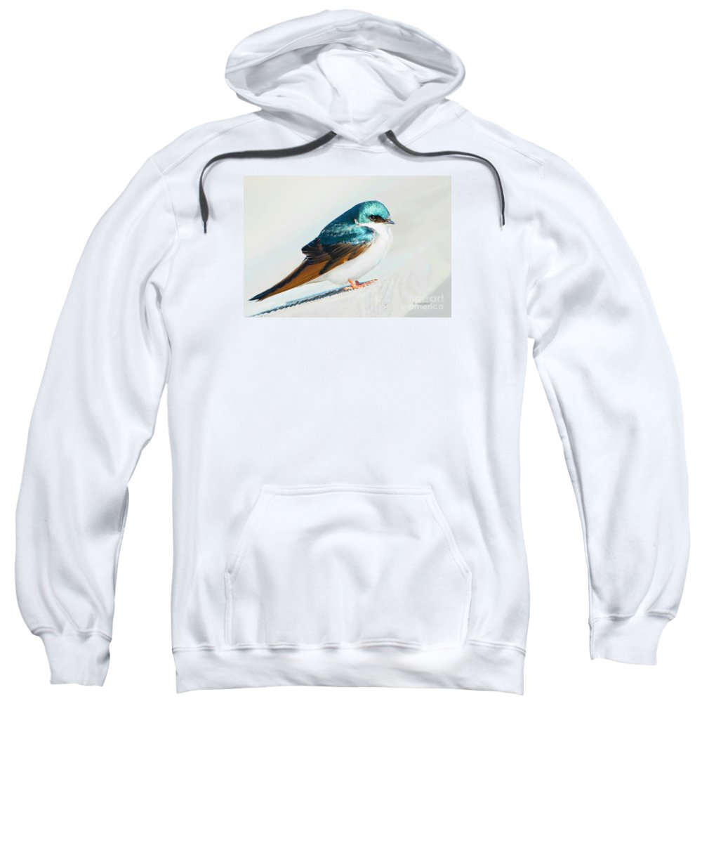 Tree Swallow Sweatshirt featuring the photograph Tree Swallow by Regina Geoghan