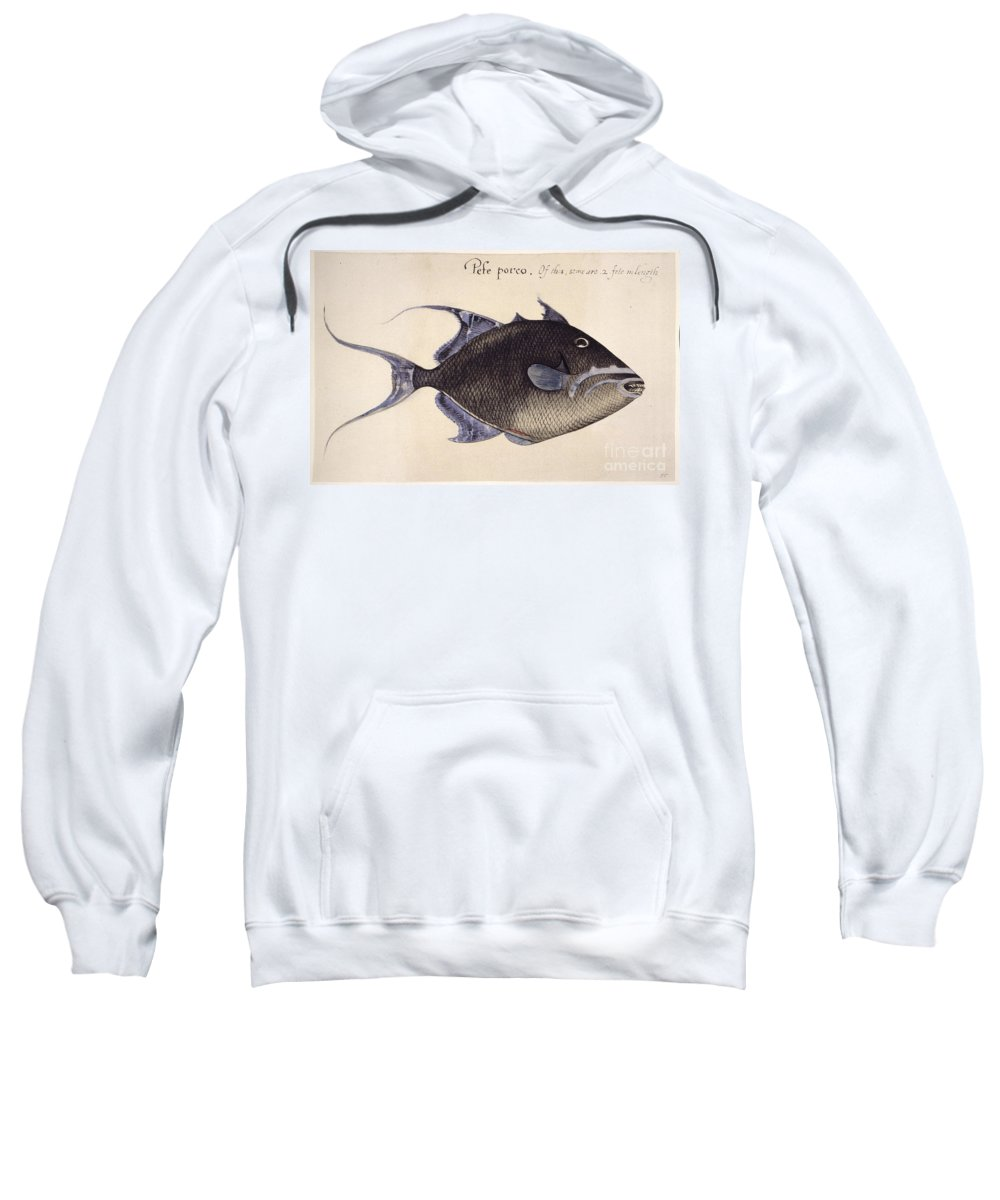 1585 Sweatshirt featuring the photograph Trigger-fish, 1585 by Granger