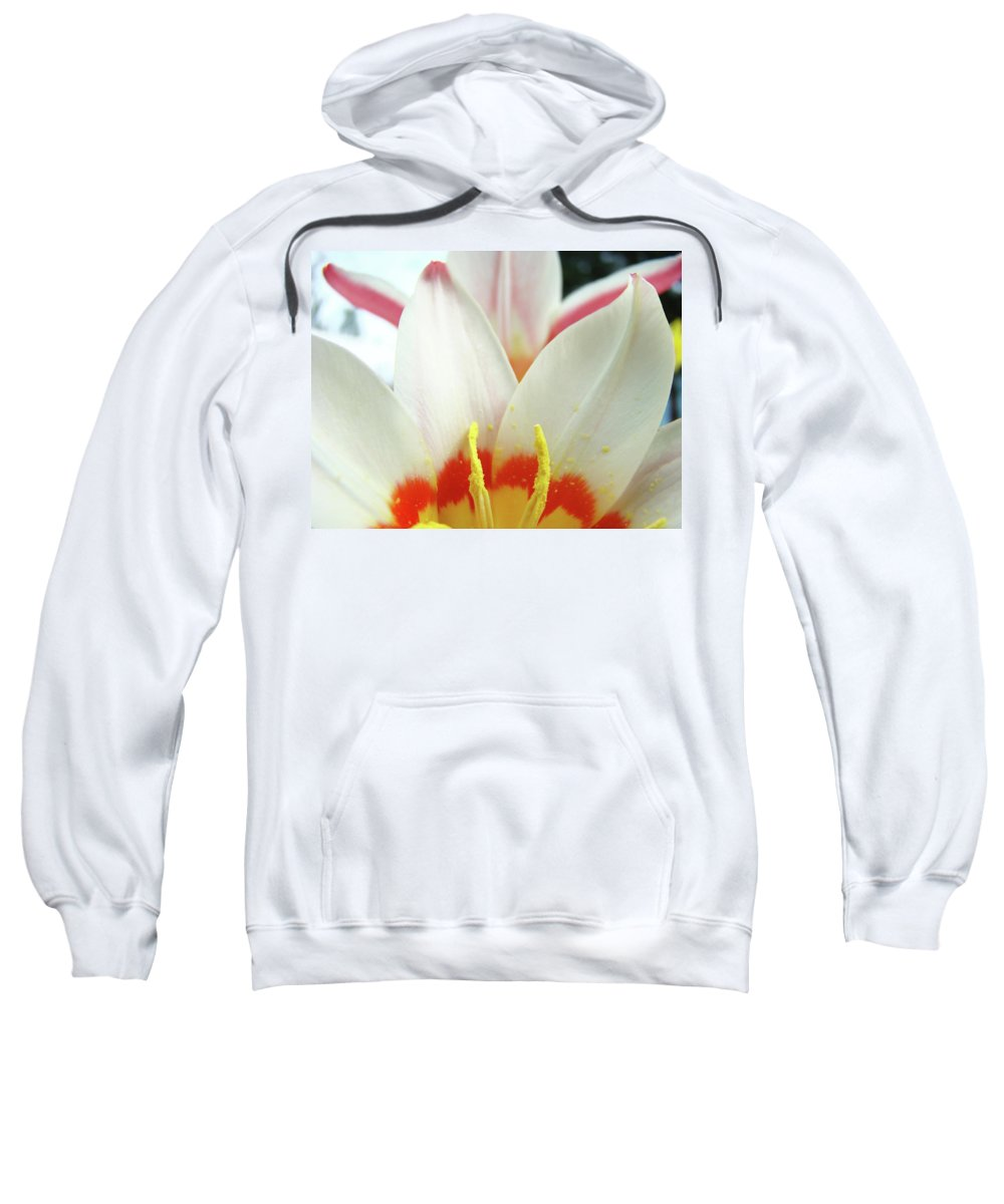 �tulips Artwork� Sweatshirt featuring the photograph Tulip Flowers Art Prints 4 Spring White Tulip Flower Macro Floral Art Nature by Baslee Troutman
