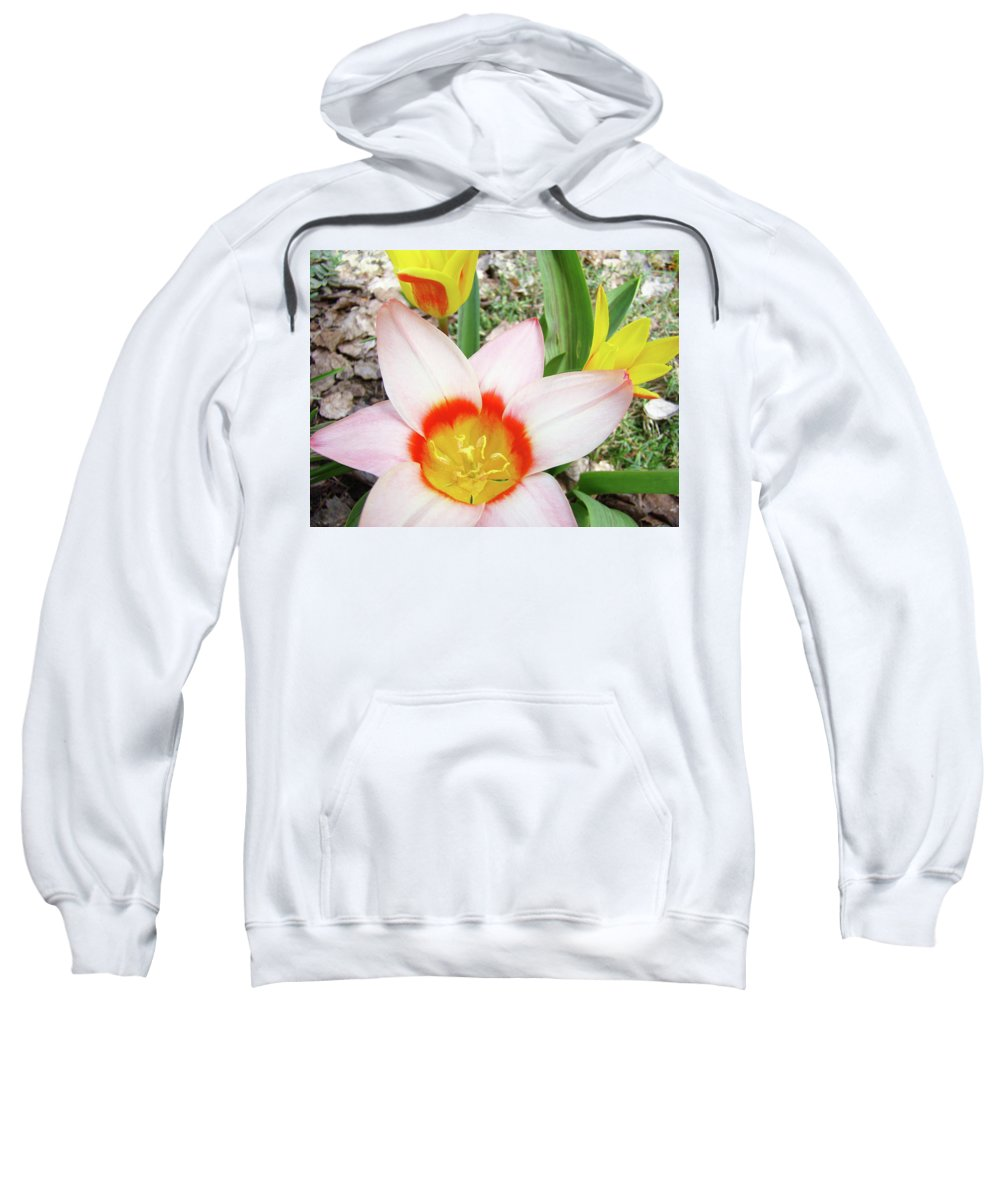 �tulips Artwork� Sweatshirt featuring the photograph Tulips Artwork 9 Spring Floral Pink Tulip Flowers Art Prints by Baslee Troutman