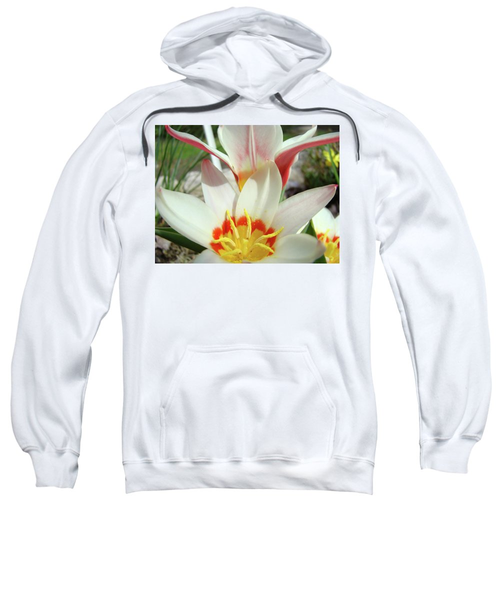 �tulips Artwork� Sweatshirt featuring the photograph Tulips Flowers Artwork 1 Tulip Flower Art Prints Spring Floral Art White Tulips Garden by Baslee Troutman