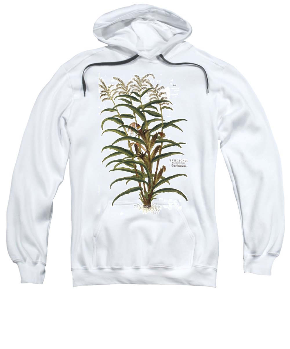 1730s Sweatshirt featuring the photograph Turkish Corn, 1735 by Granger
