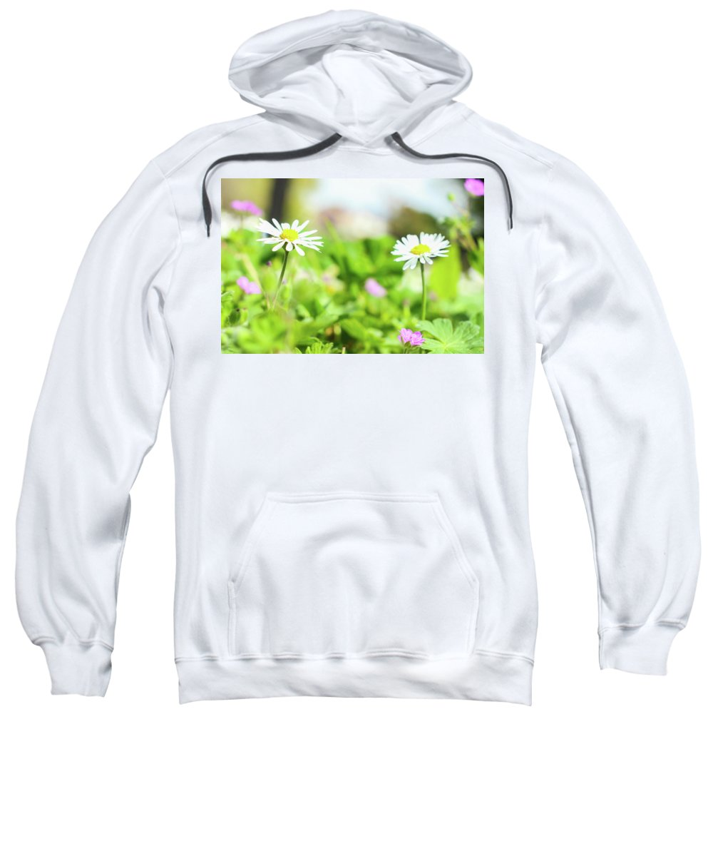 Sweatshirt featuring the photograph Daisies by Vesna Grgurevic