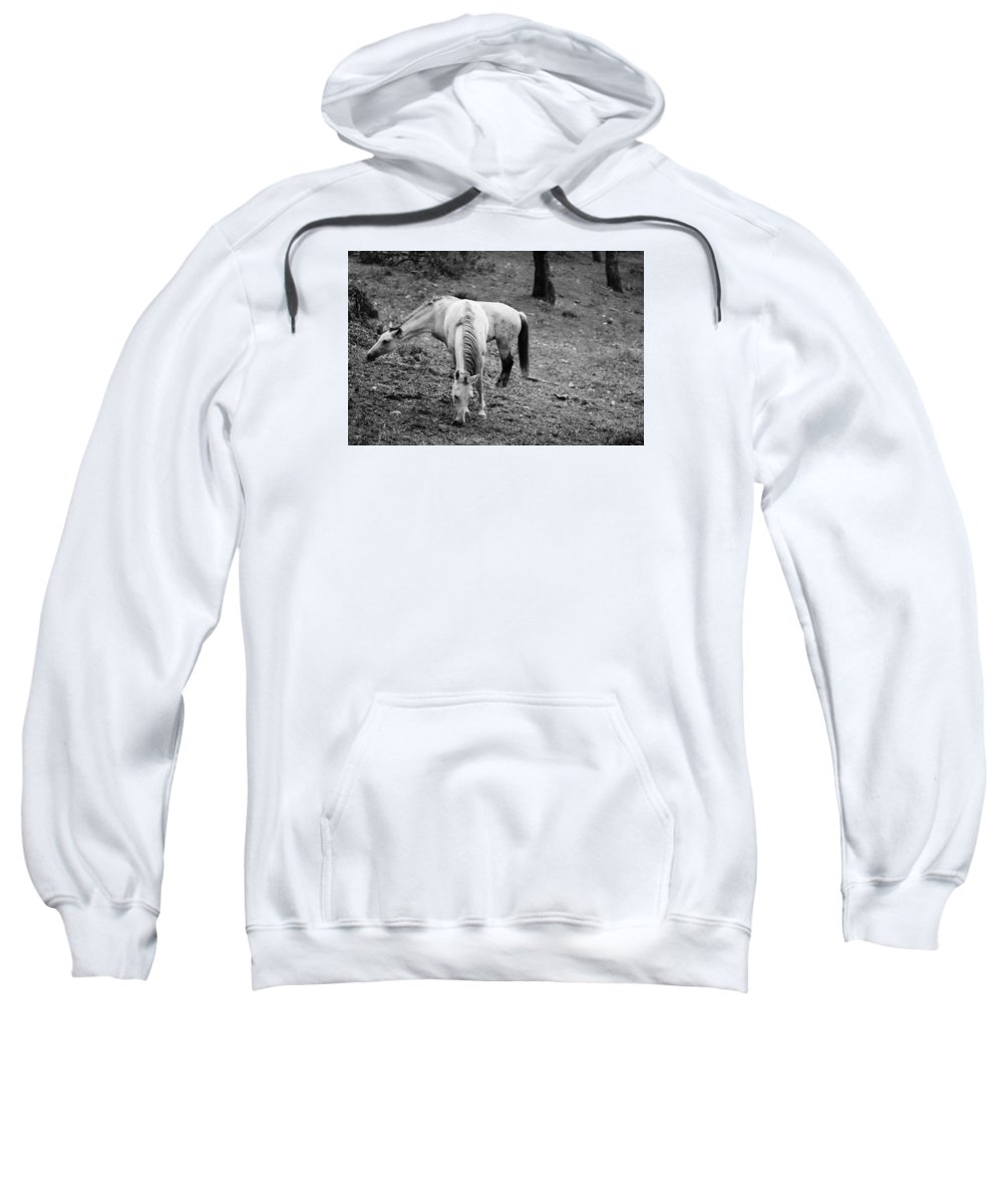 Horses Sweatshirt featuring the photograph Two Horses by Borhan Alzibi