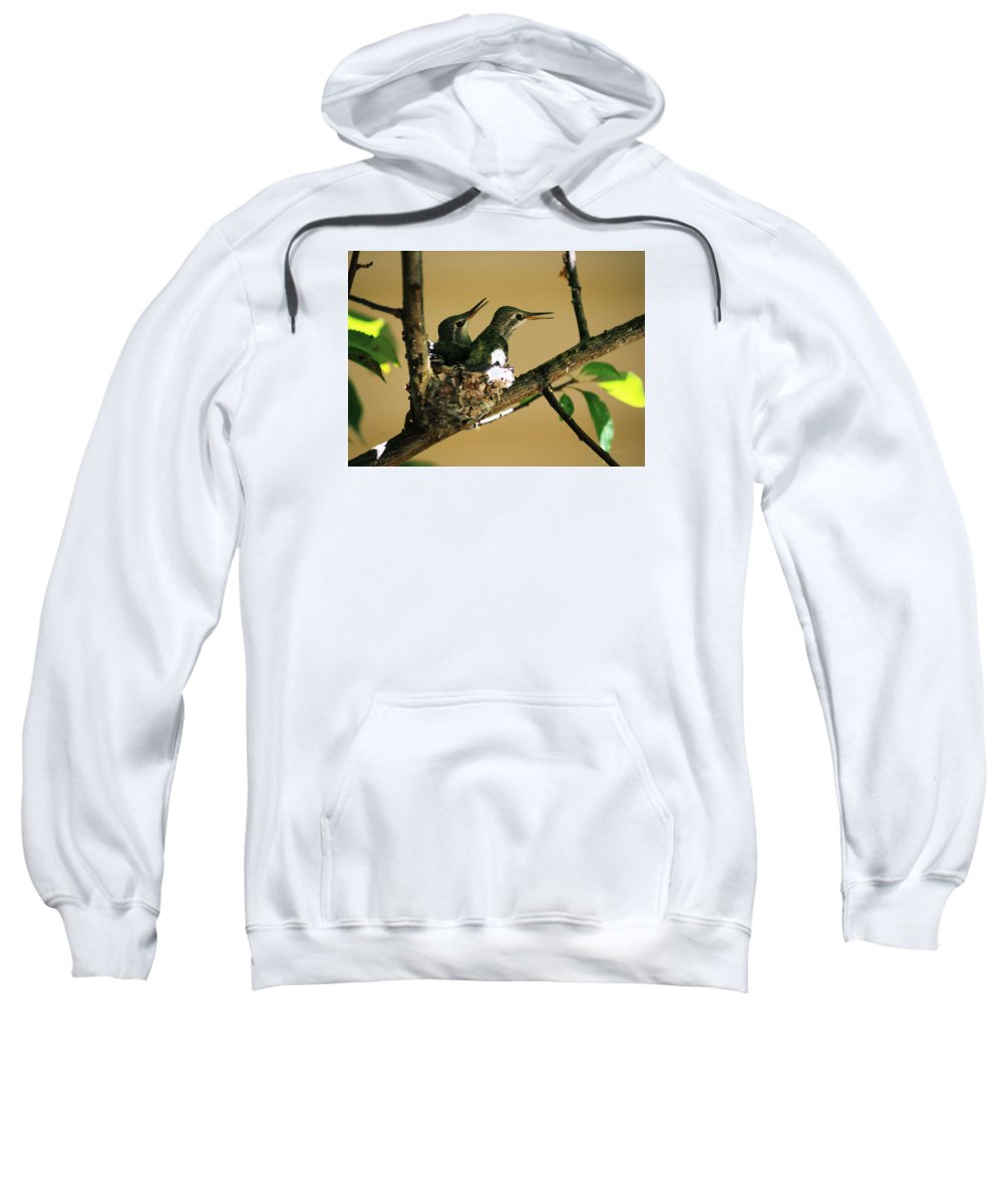Hummingbirds Sweatshirt featuring the photograph Two Hummingbird Babies In A Nest 5 by Xueling Zou
