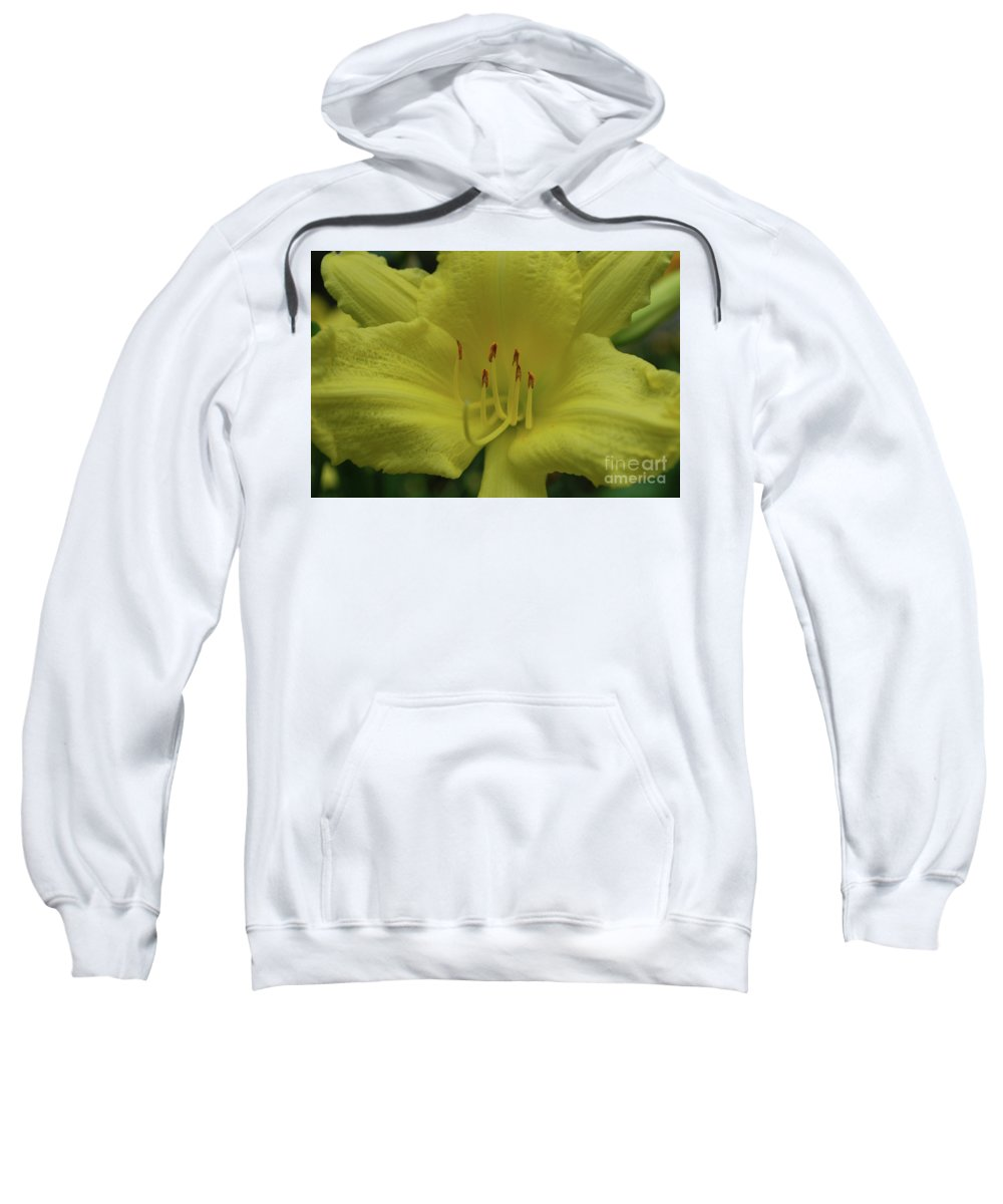 Lily Sweatshirt featuring the photograph Up-close With A Very Bright Yellow Daylily Flower by DejaVu Designs